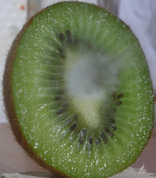 kiwi fruit shot by air rifle